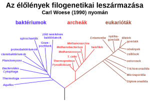 1200px-Phylogenetic_tree_wiki