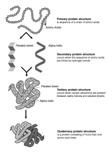 Protein-structure