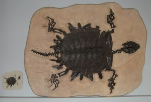Turtle_fossil_cast_freewiki