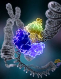 DNA_Repair_2_wikifree